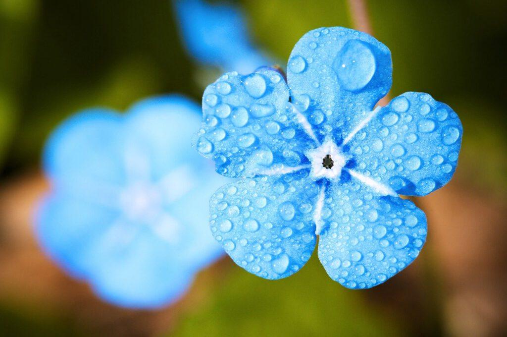 flower, macro, forget
