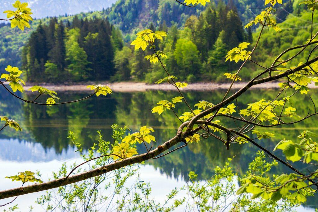 tree, leaf, green